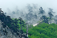 Monte Pollino and Cuirassed Pines (Pinus leucodermis), Pollino National Park, Italy; WWoE Mission