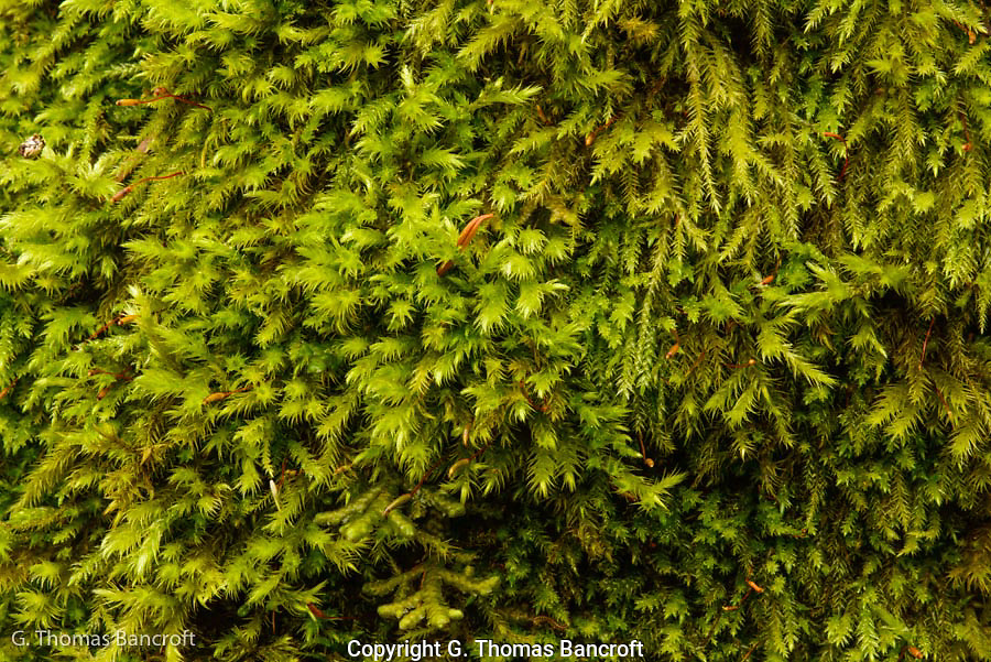 Moss on a trunk of a tree in Seward Park