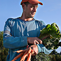 Farmer Gavin Dandy with recently harvested carrots and chard at Everdale organic farm, near Toronto, Ontario