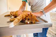 ROTTERDAM Kat bij de dierenarts.  thermometer in zijn achterste  - ROBIN UTRECHT