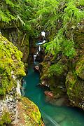 Avalanche Creek, Glacier National Park, Montana USA