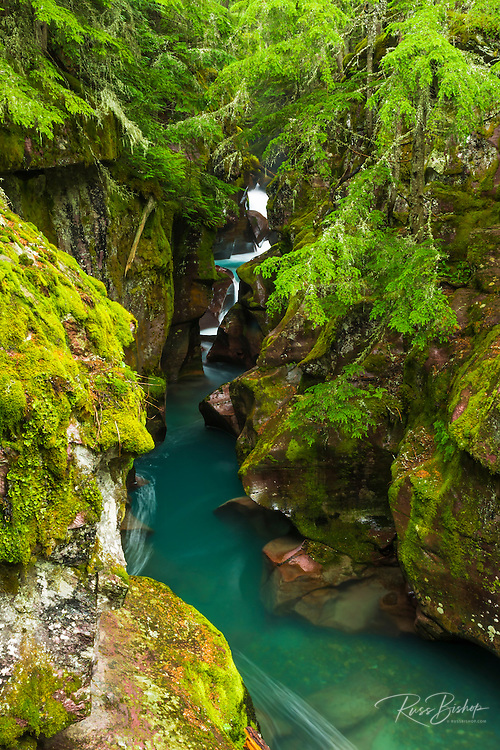 Avalanche Creek, Glacier National Park, Montana USA
