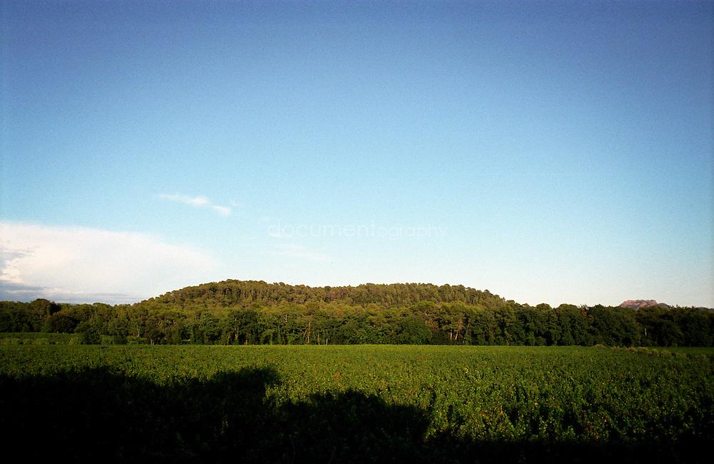 Les vignes du Chateau Sainte Roseline, Les Arcs-sur-Argens, France