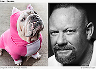 Bulldog wearing a pig costume. Portrait of Roger Hazard.