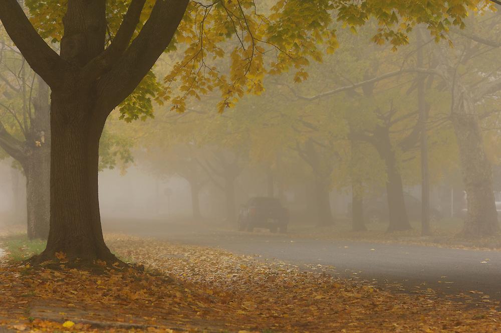 suburban street in Dunellen, New Jersey on an early autumn, foggy morning.