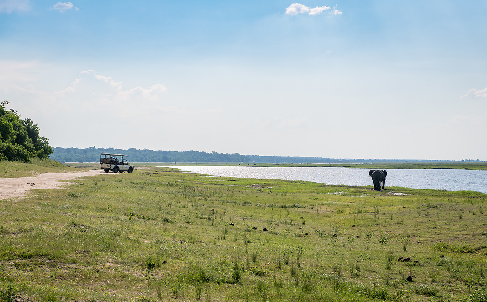 Game viewer vehicle parks along road so safari goers can watch African bush elephant (Loxodonta africana) walking along the water's edge, Chobe National Park - Botswana