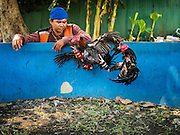 09 MARCH 2016 - BANGKOK, THAILAND: A motorcycle taxi driver watches his fighting cock spar in a training bout in the Pom Mahakan community in Bangkok. The birds wore tiny muzzles and had their legs padded to prevent injury. The community of about 50 families was once known as the cockfighting center of Bangkok. Gambling is now prohibited by the military government and cockfighting is not as popular as it once was. Cockfights are still staged in clandestine pits in Bangkok but outside of Bangkok cockfights are common.    PHOTO BY JACK KURTZ