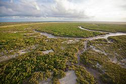Soft morning light over the mangroves near Dampier Creek in Broome.