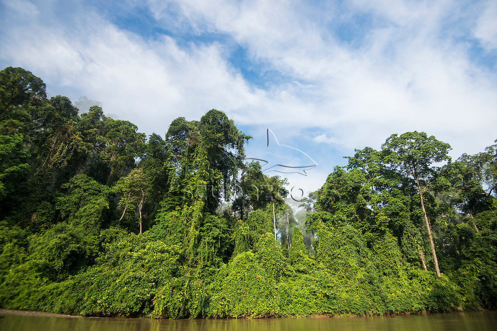 A riverbank and rainforest in morning light and mist, Danum Valley, Sabah, Malaysia.