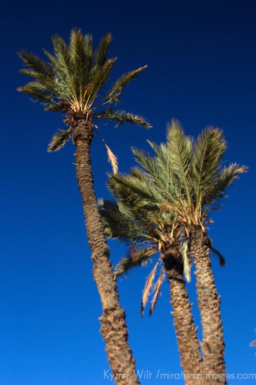 Africa, Morocco, Skoura. Desert Palm Trees and Sky.