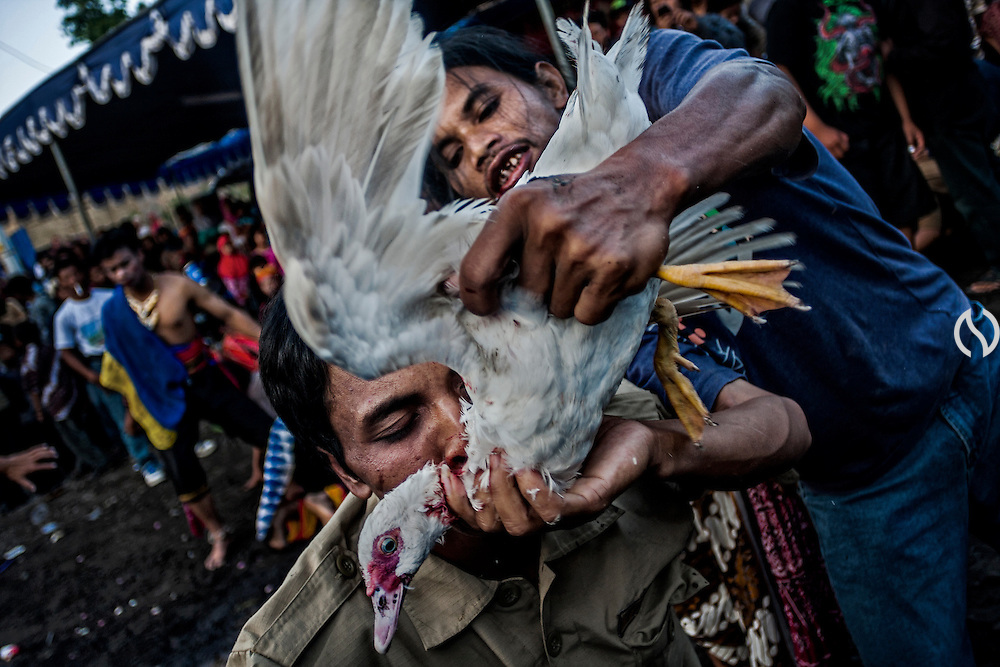 A trance man offers a duck blood to the other trance man during a traditional dance perfomance in Cangkringan, Sleman, Yogyakarta, Indonesia, July 2, 2011. The trance dance perfomance is a part of ritual that held by villagers on the slope of Merapi volcano. In Javanese philosophy, there are two worlds that human should deal with; macrocosm and microcosm. Macrocosm deals with spirituality and mystery, whereas microcosm deals with reality and physic. The aim of life is to harmonize the both. Javanism is a way of living, merely like Hinduism or Buddhism. It is a thought that stresses on inner peace, balance and harmony and it contains complete tools to interpret life whether it is the Sein (Being) or the Werden (Becoming).