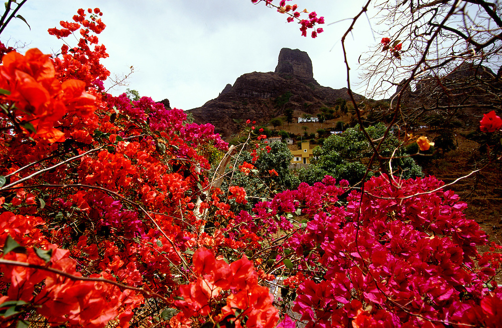 The only botanic garden in Cape Verde is located near Sao Jorge dos Orgaos. The village has this name due to the similarity between the sorrounding mountains and chirches  organ-pipes.