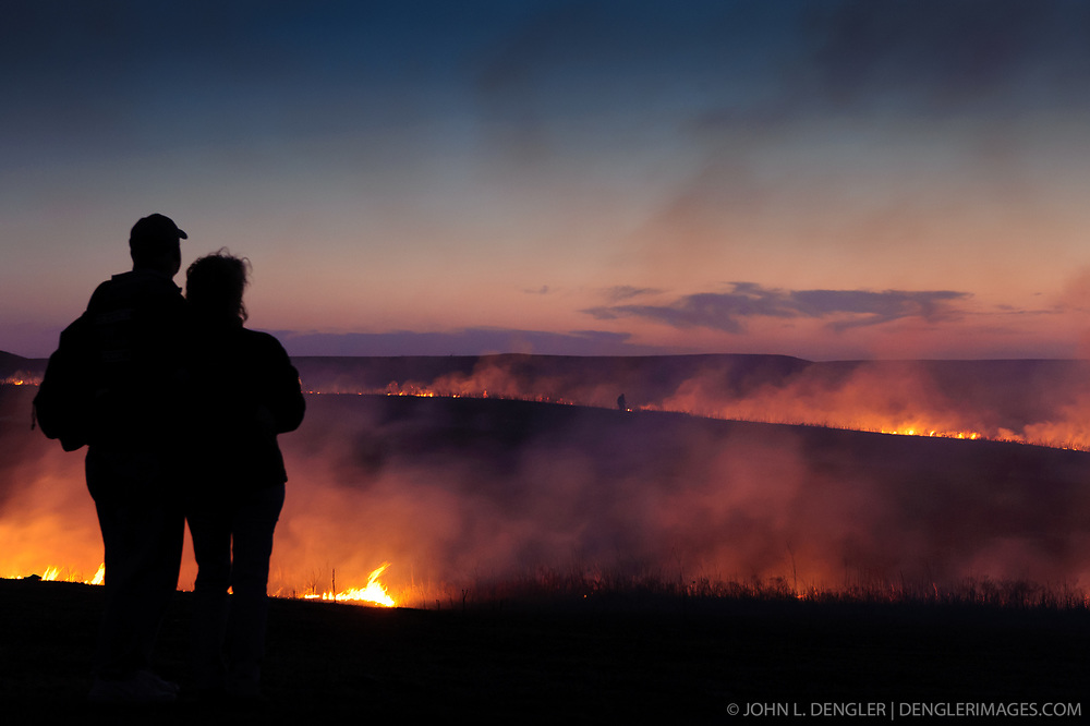 """Unidentified participants at the """"Flames in the Flint Hills"""" observe the burning prairie at the Flying W Ranch near Clements, Kansas. This agritourism event allows ranch guests to take part in lighting the prescribed burns. Prairie grasses in the Kansas Flint Hills are intentionally burned by land mangers and cattle ranchers in the spring to prepare the land for cattle grazing and help maintain a healthy tallgrass prairie ecosystem. The burning is also an effective way of controlling invasive plants and trees. The prairie grassland is burned when the soil is moist but grasses are dry. This allows the deep roots of the grasses to survive and the burned grasses on the soil surface return as nutrients to the soil. These nutrients allow for the rapid growth of new grass. After approximately two weeks of burning, new grass emerges. Less than four percent of the original 140 million acres of tallgrass prairie remains in North America. Most of the remaining tallgrass prairie is in the Flint Hills in Kansas."""