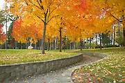Idaho, North, Kootenai County, Coeur d Alene. Autumn color in Ramsey Park.