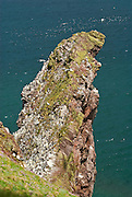 EN.- Seabird colony on St. Abbs Head, Scotland, UK.<br /> ES.- Colonia de aves marinas en St. Abbs Head, Escocia, Reino Unido.