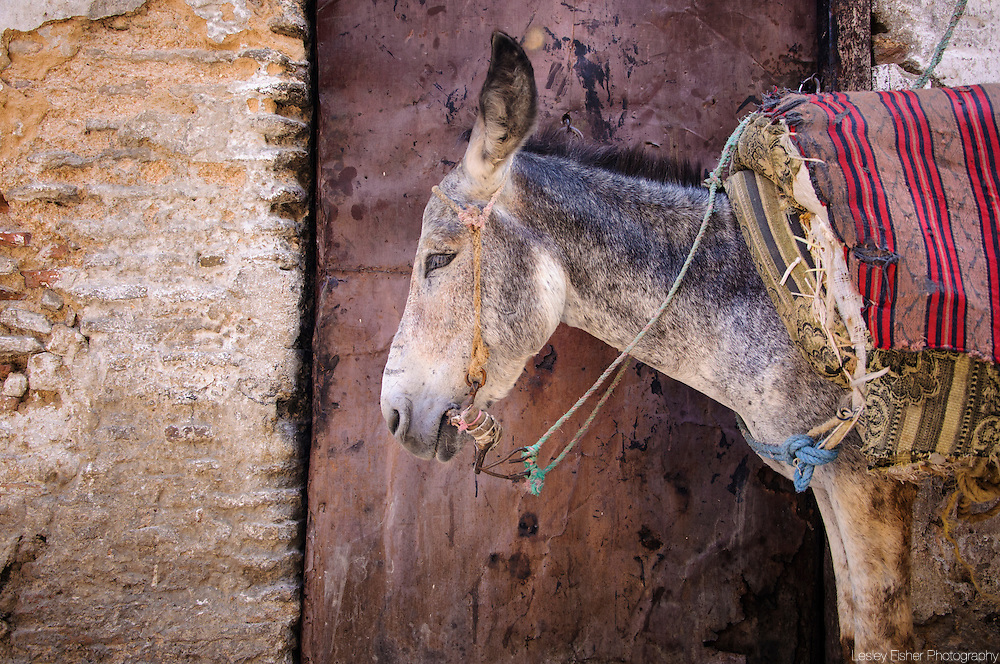 Donkey waiting on the street in Fes el Bali, the old city, Morocco