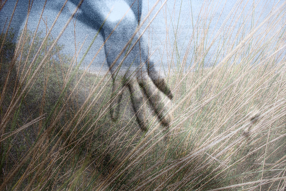 A hand and grass montage