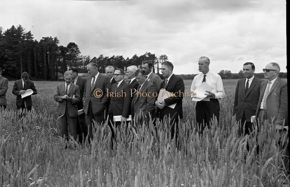 Wheatfield day at the University College farm, Lyons Estate, Celbridge, Co Kildare. Politicians, members of agricultural organizations, the grain trade and the flour industry inspect the wheat trials being carried out to test replacement wheat varieties and the impact of new fertilizers. .27.07.1967