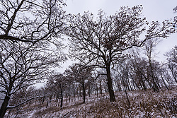 The trees and hills of the Pleasant Valley Conservancy in Southern Wisconsin.