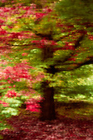 The beauty of autumn shown in abstract.