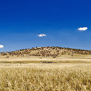 A grassy field and hill in the Australian outback