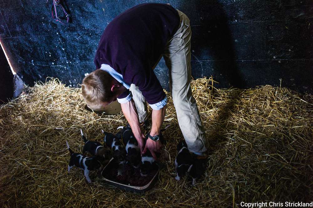 Abbotrule, Bonchester Bridge, Hawick, Scotland, UK. 9th July 2015. Huntsman Johnny Richardson of the Jedforest Hunt arranges foxhound pups from bitch 'Hassle' round a tray ensuring they all get an equal portion of mincemeat.