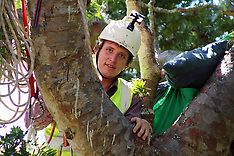 Auckland-Protest against felling of 500 yr old Kauri tree