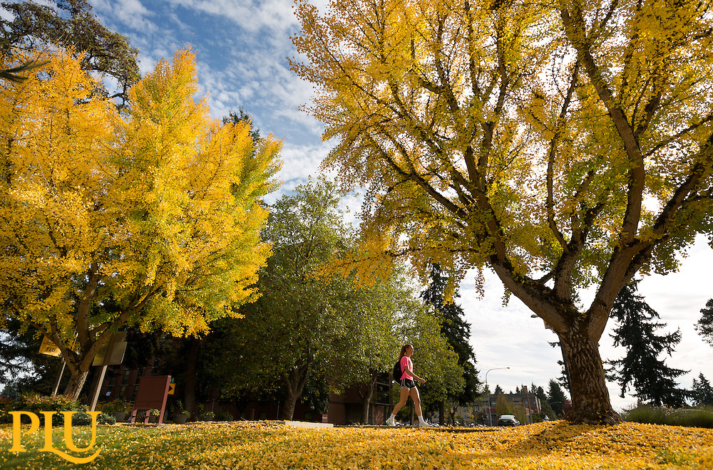 fall color on the campus of PLU on Wednesday, Oct. 21, 2015. (Photo/John Froschauer)