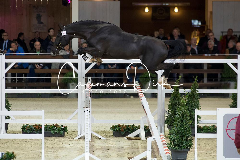 010, Nero C<br /> BWP Hengsten keuring Koningshooikt 2015<br /> © Hippo Foto - Dirk Caremans<br /> 23/01/16