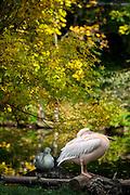 Aussenanlage im Prager Zoo in Troja.