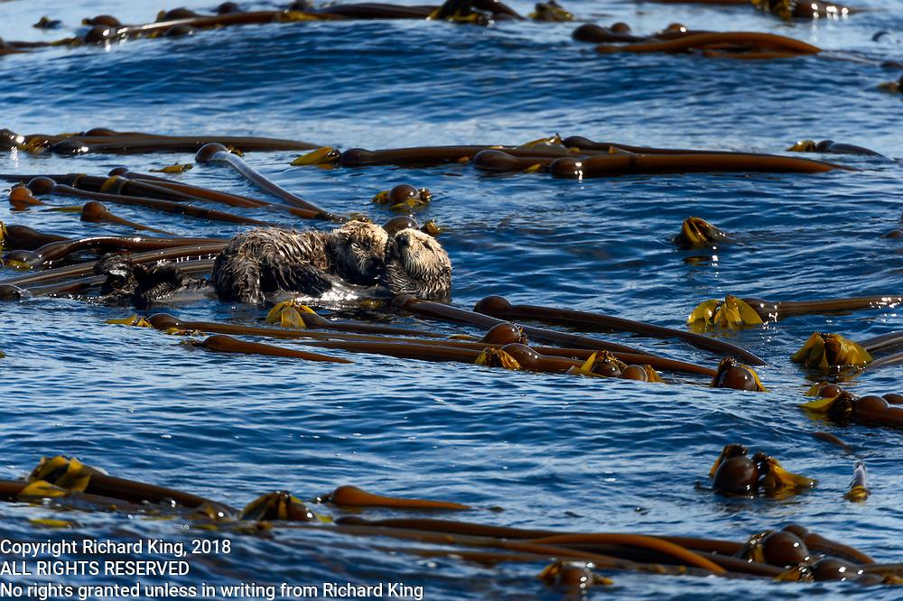 Wildlife photography from Archipeligo Wildlfe Cruise, British Columbia, Canada