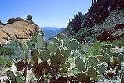 Cactus and jagged rock formations in Superstition Wilderness, Tonto NF, Arizona, USA