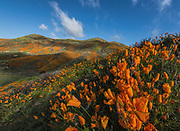Wildflowers on March 13, 2019 at Walker Canyon - Lake Elsinore, California (Photo: Charlie Steffens