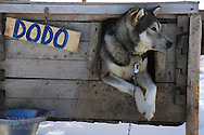 Dogs rests in box at Green Dog Svalbard sled dog kennel in April near Longyearbyen, Svalbard, Norway.