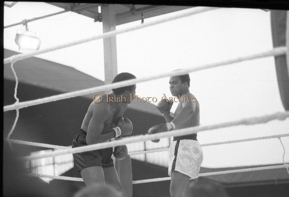 Ali vs Lewis Fight, Croke Park,Dublin.<br /> 1972.<br /> 19.07.1972.<br /> 07.19.1972.<br /> 19th July 1972.<br /> As part of his built up for a World Championship attempt against the current champion, 'Smokin' Joe Frazier,Muhammad Ali fought Al 'Blue' Lewis at Croke Park,Dublin,Ireland. Muhammad Ali won the fight with a TKO when the fight was stopped in the eleventh round.<br /> .<br /> Image of a snarling Ali as he prepares to throw a right to the head of Lewis.