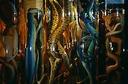 DEU, Deutschland: Schlange, konservierte Schlangen in Gläsern, Naturhistorisches Museum der Humboldt Universität Berlin, sie haben die größte Schlangensammlung Europas, Berlin | DEU, Germany: Snake, conserved snakes in glasses, Natural History Museum of the Humboldt University Berlin, they have the biggest snake collection in Europe, Berlin |