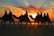 Camels on Cable Beach