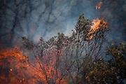 Nova Lima_MG, Brasil.<br /> <br /> Incendio no Parque Estadual Serra do Rola-Moca em Nova Lima, Minas Gerais, e o terceiro maior parque em area urbana do pais. A localizacao do parque em area urbana o torna um dos mais vulneraveis aos incendios florestais, muitos deles iniciados de forma criminosa. <br /> <br /> Fire in Serra Rola-Moca State Park in Nova Lima, Minas Gerais, is the third largest urban park in the country. Its location in an urban area makes it one of the most vulnerable to forest fires, many of them started in a criminal way.<br /> <br /> Foto: JOAO MARCOS ROSA / NITRO