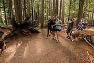 Ross Creek Cedars Scenic Area, Montana, Western Red Cedars, tourists, hike, dogs