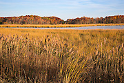 Fall in the marsh.  Bombay Hook NWR, Delaware