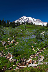 Small streams and wildflowers grow in a meadow with Mount Rainier in the background, Mt. Rainier National Park, Washington, United States of AmericaMt. Rainier National Park, Washington, United States of America