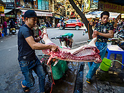 "21 DECEMBER 2017 - HANOI, VIETNAM: Men deliver a side of pork to a butcher shop in Hanoi's old quater. The old quarter is the heart of Hanoi, with narrow streets and lots of small shops but it's being ""gentrified"" because of tourism and some of the shops are being turned into hotels and cafes for tourists and wealthy Vietnamese.   PHOTO BY JACK KURTZ"