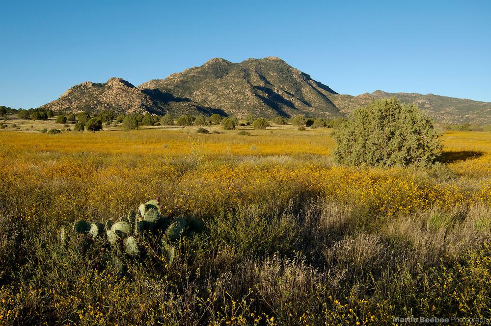 Granite Mountain above a field of annual goldeneyes (Viguiera annua), Prescott National Forest, Prescott, Arizona