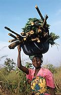 cutting firewood in Rwanda