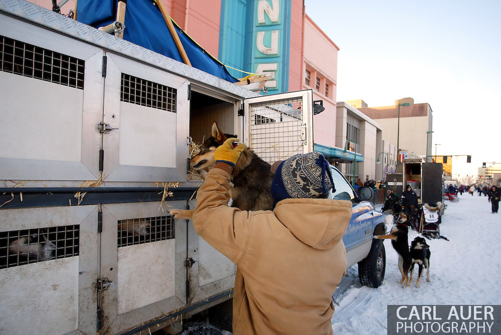 3/3/2007:  Anchorage Alaska -  Prior to the Ceremonial Start of the 35th Iditarod Sled Dog Race, Rookie Hernan Maquieira of Ushuaia, Argentina, a rookie Iditarod musher, takes care of his dogs.