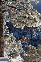 Brief sunlight illuminates frost laden branches and snow at Bryce Canyon National Park.