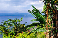 Indonesia, Sumatra. Samosir. Banana tree at Lake Toba. Tuk Tuk looking east.