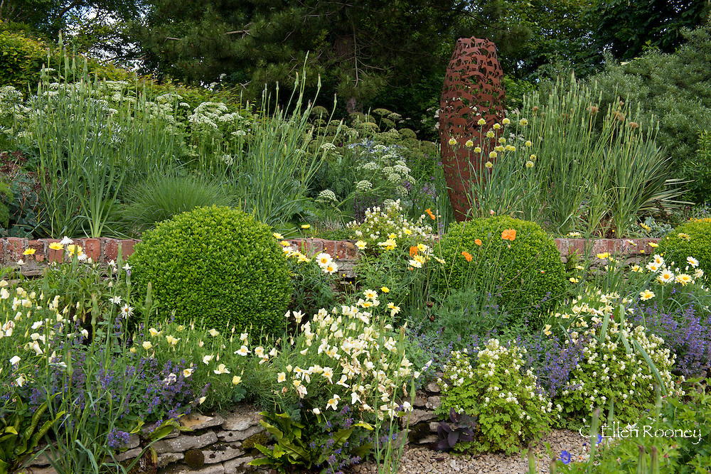 Raised beds containing Buxus, Ligusticum lucidum, Allium obliqum, Trapaeolum polyphyllum, Nepeta cataria and Papaver orientale along a brick and stone wall in Derry Watkin's Special Plants Garden in Cold Ashton, Chippenham, Somerset, UK
