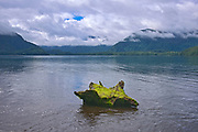 Log on shore at Rennell Sound. Graham Island. , Haida Gwaii (formerly the Queen Charlotte Islands), British Columbia, Canada