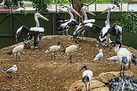 Australian Pelicans & White Ibises